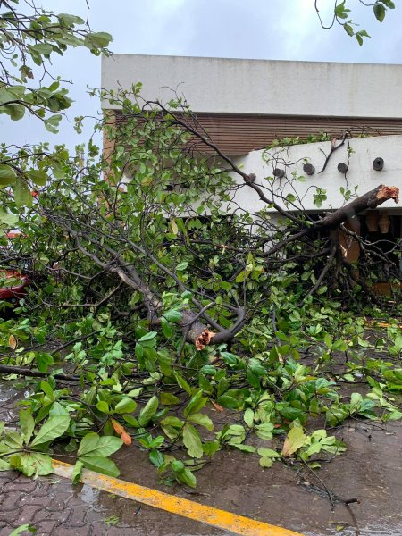 Huge branches snapped off.